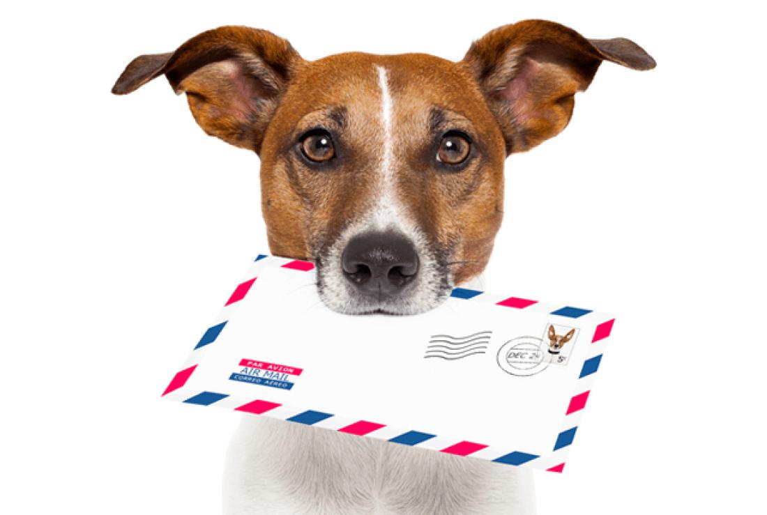 email marketing kuldo